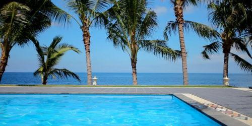 groepsreizen palmboom